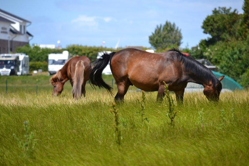 Pferde vor dem Stellplatz