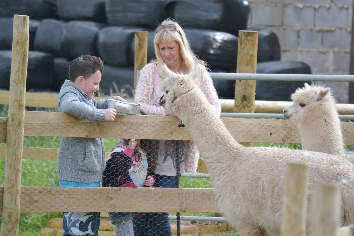 Alpaca Fütterung auf dem Stellplatz