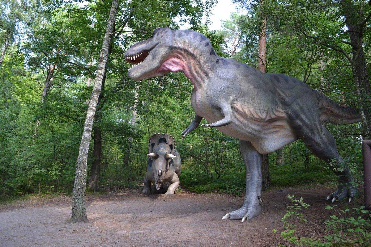 Tyrannosaurus Rex - bis zu 13 m