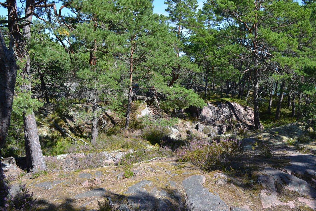 Waldweg auf Gränsö