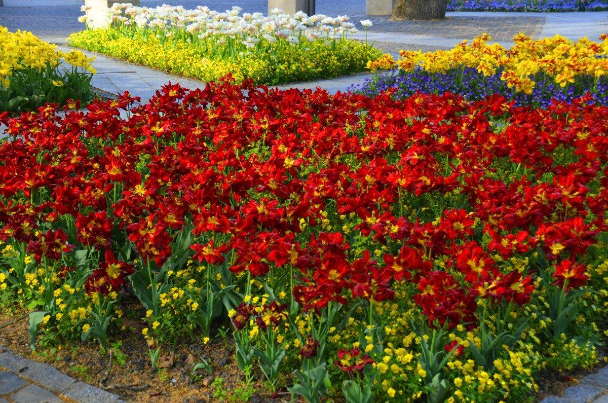 Blumenpracht im Zentrum von Heviz
