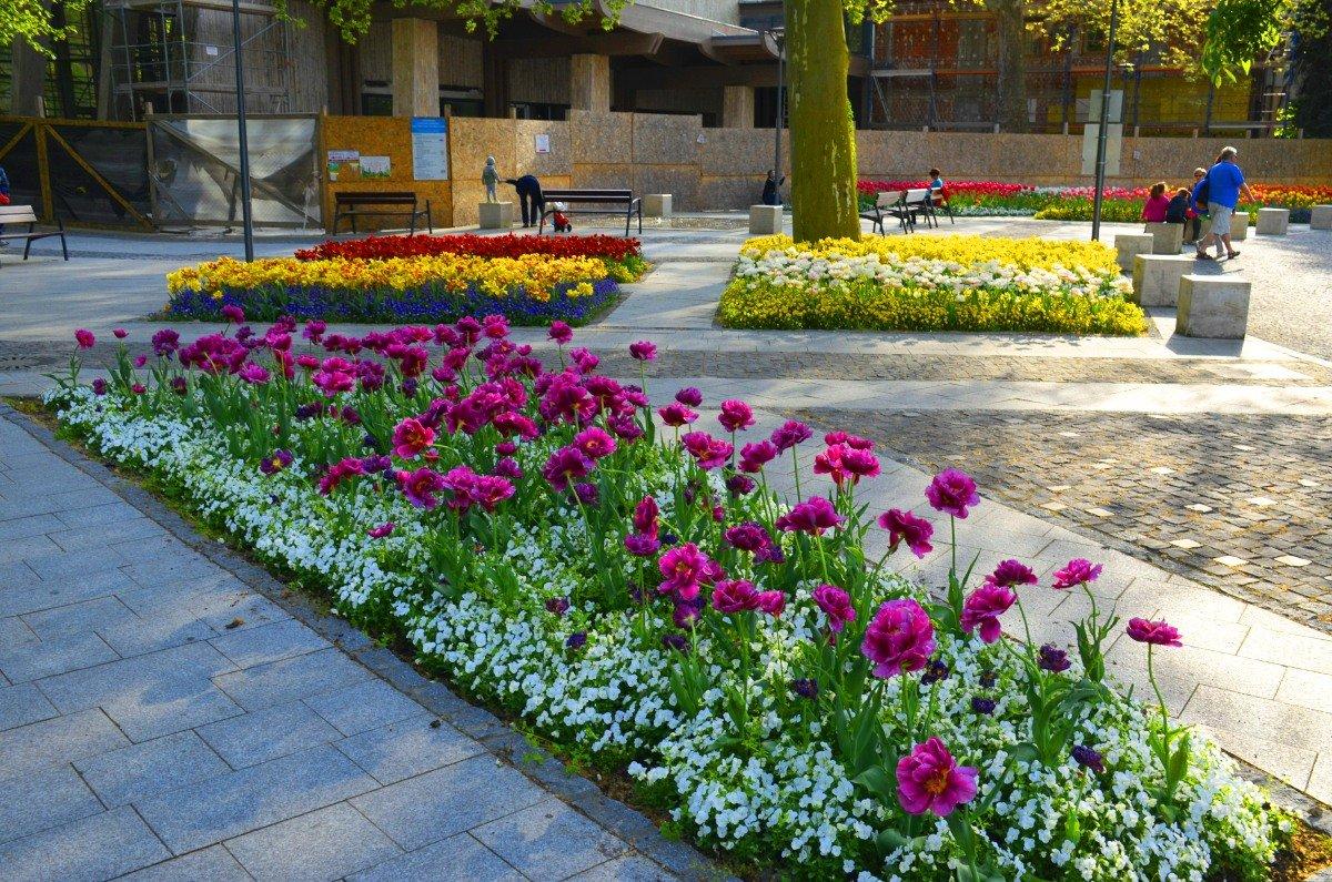 Blumenpracht im Zentrum