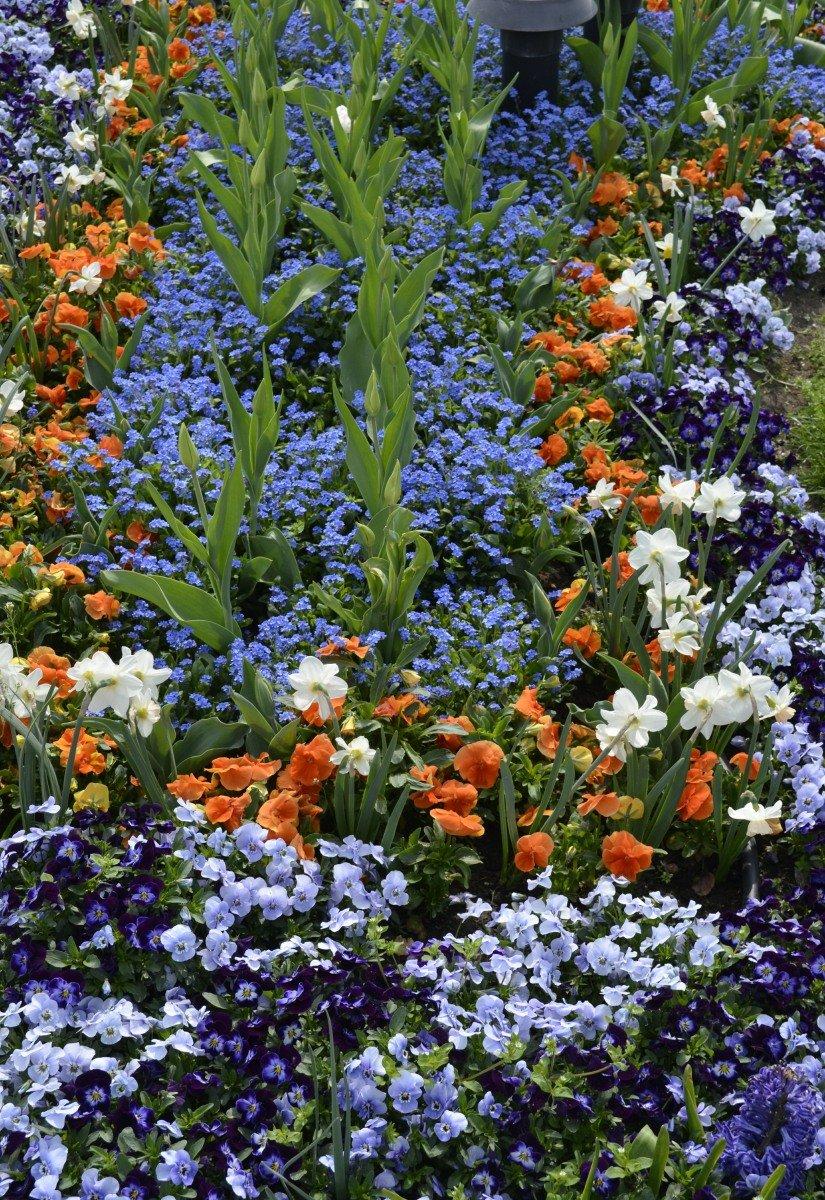 Blumenpracht in Gödöllö