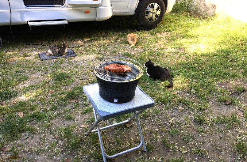 Drei Katzen lauern schon auf das leckere Entenfilet vom Grill