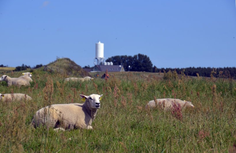 Schafe teilen sich das Hochplateau mit den Besuchern