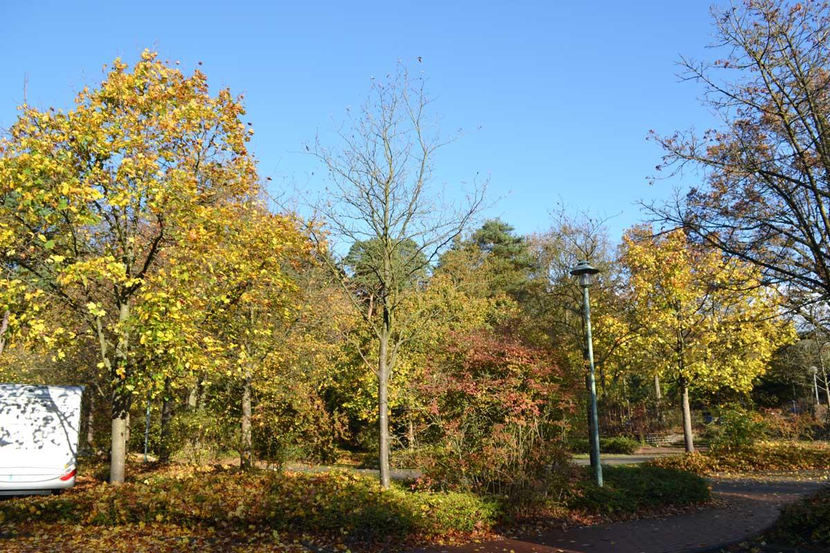 Herbstfarben auf dem Stellplatz in Soltau