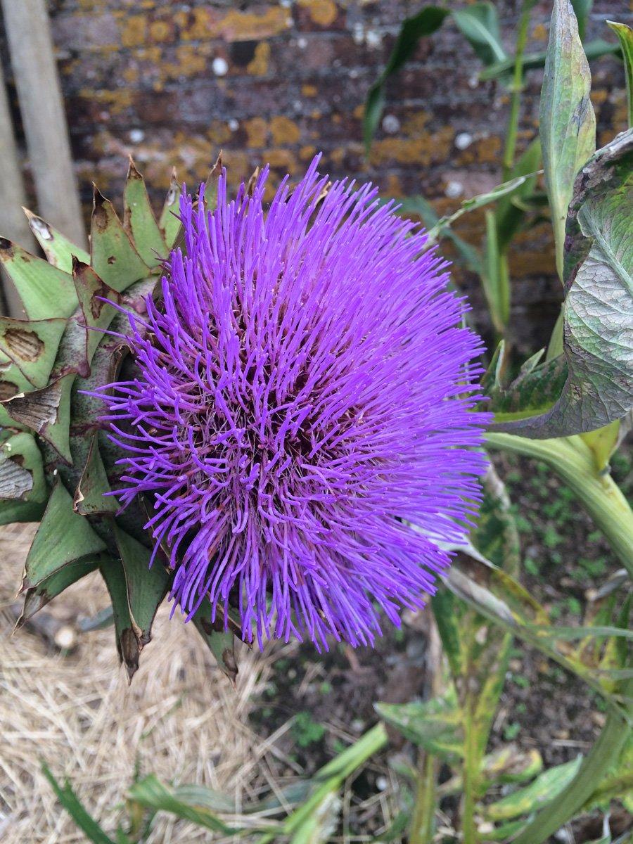Blütenpracht in Trengwainton