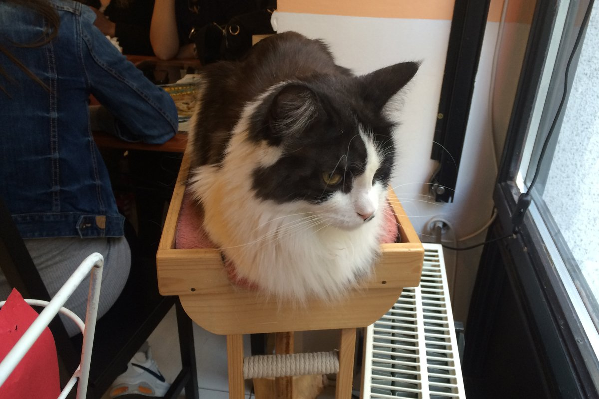 "Bewohner im ""Cat Cafe"""