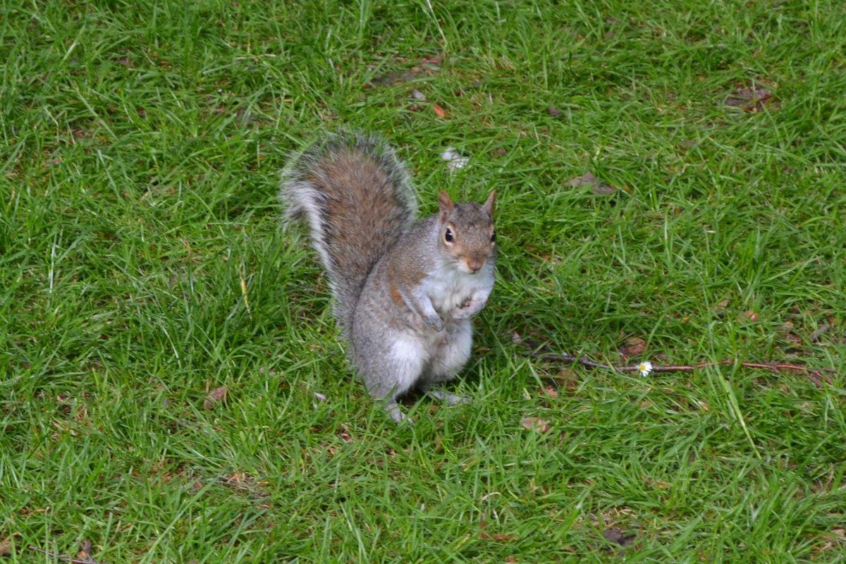 Freches Eichhörnchen im Stadtpark