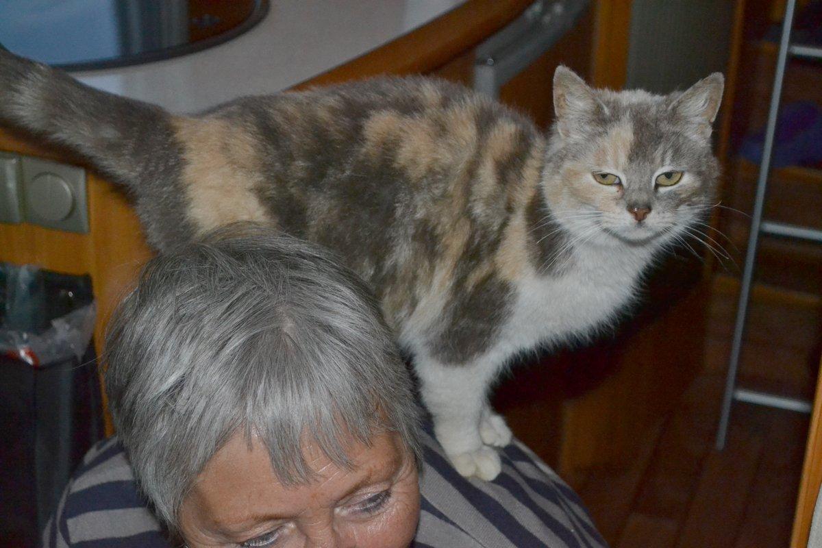 Katzenbesuch im Wohnmobil