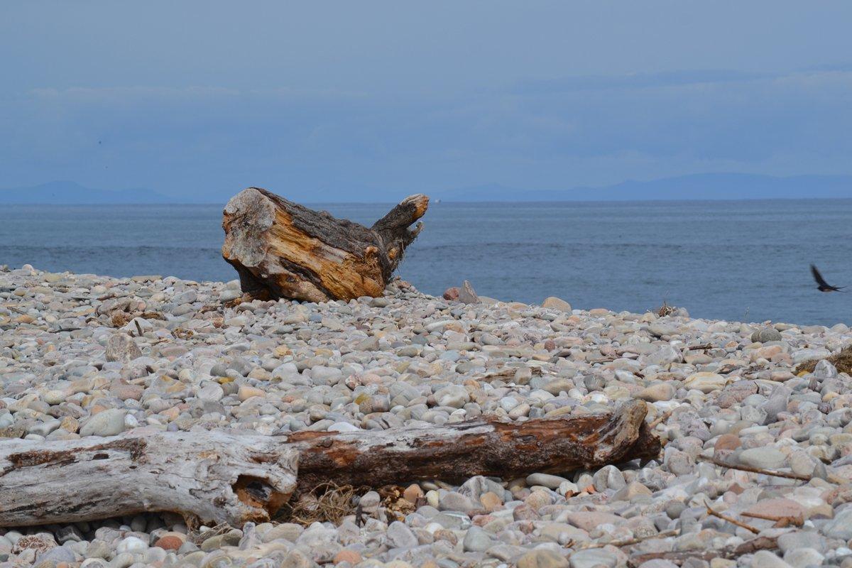 Strandgut in Spey Bay