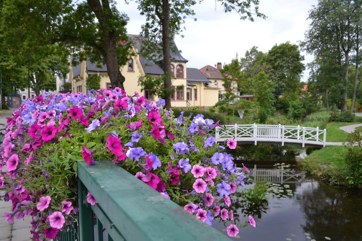 Blumenpracht am Stadtpark