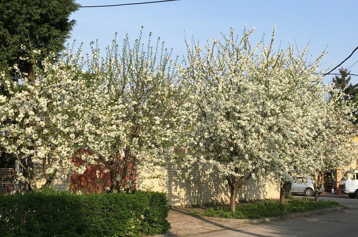 Blütenpracht am Straßenrand