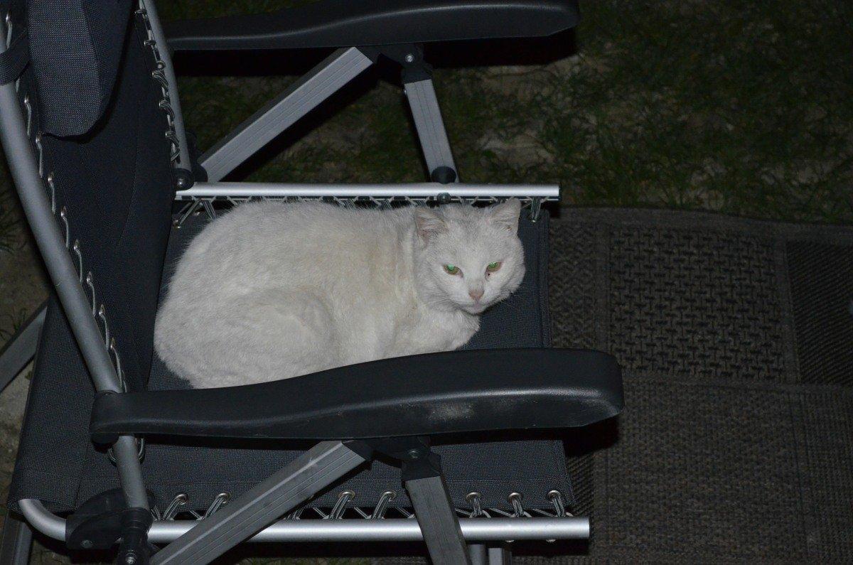 Gast auf unserem Stuhl