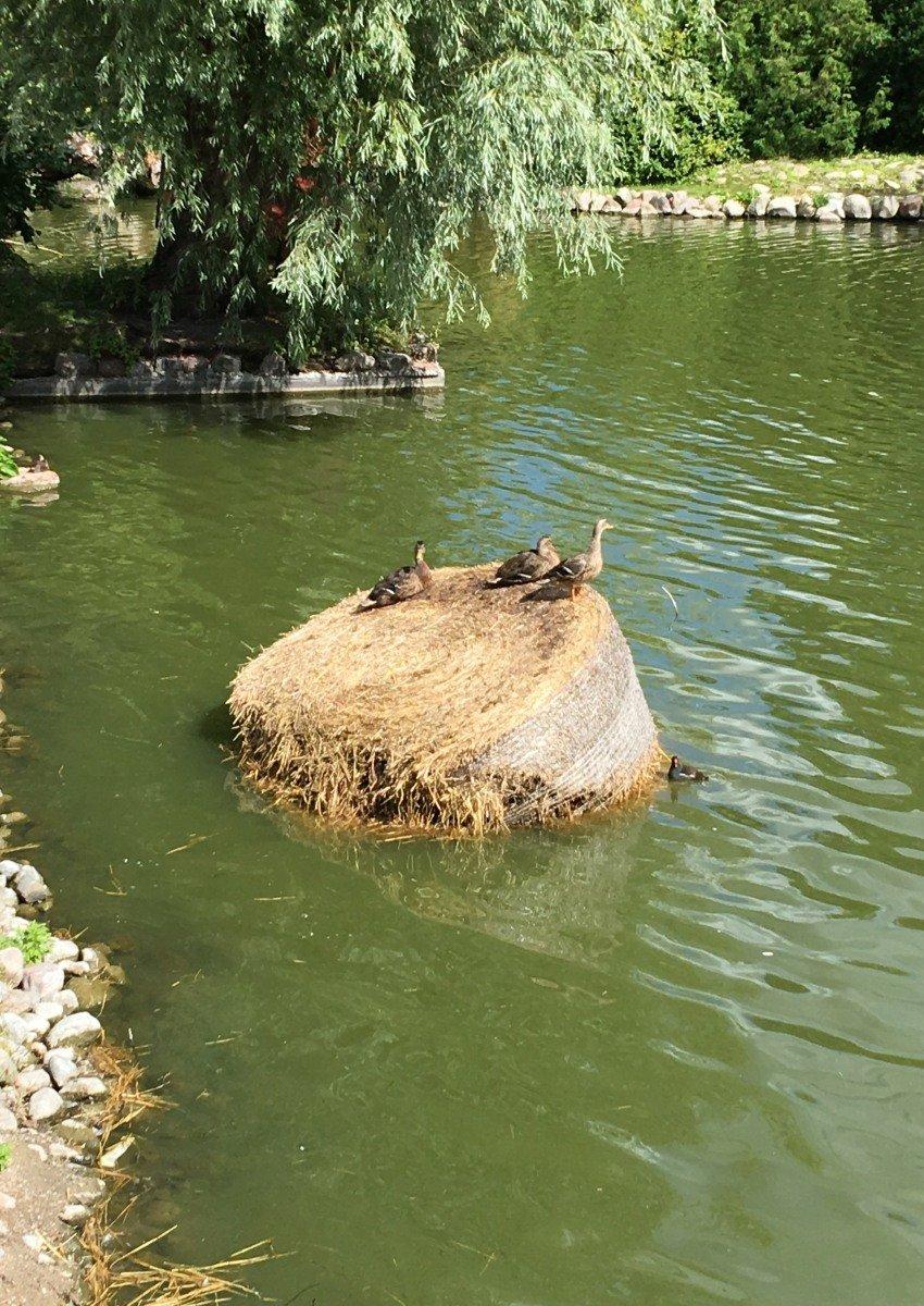 Enten auf Strohballen