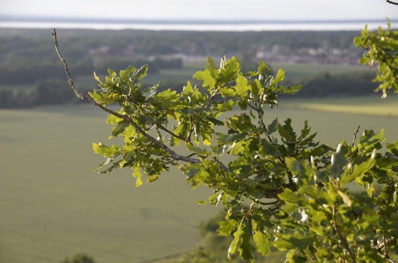 Aussicht vom Hunneberg auf den Vänernsee
