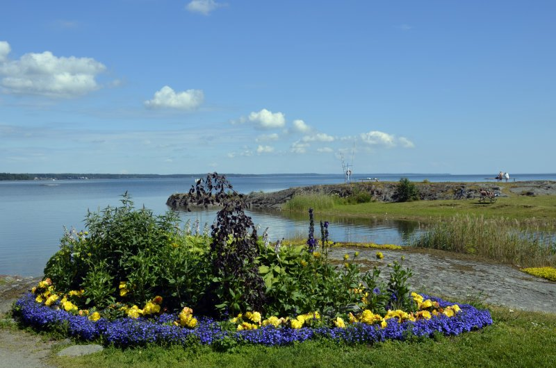 Blumenpracht am Ufer des Vänernsees