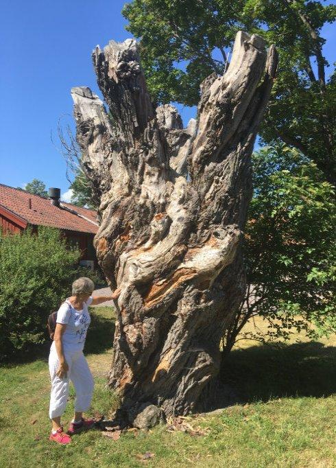 Knorriger Baumstumpf
