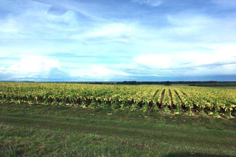 Tabakanbeu in der Region Picardie