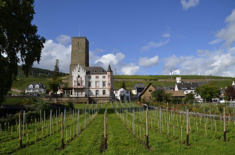 Weingut Carl Jung in Rüsselsheim
