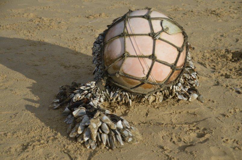 Strandgut - Boje mit Muscheln behaftet
