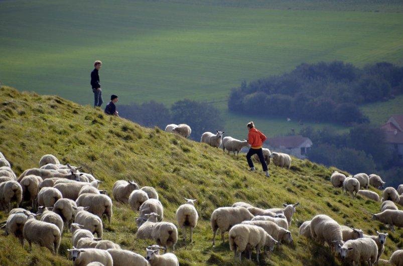 Hunderte von Schafen auf den recht steilen Weiden