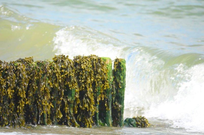 Buhne am Strand von Rosslare