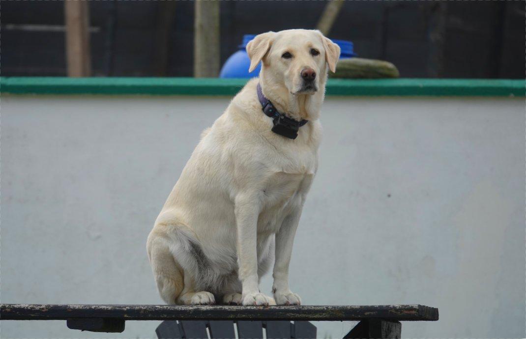 Lieblingsplatz für diesen Hund: Der Gartentisch