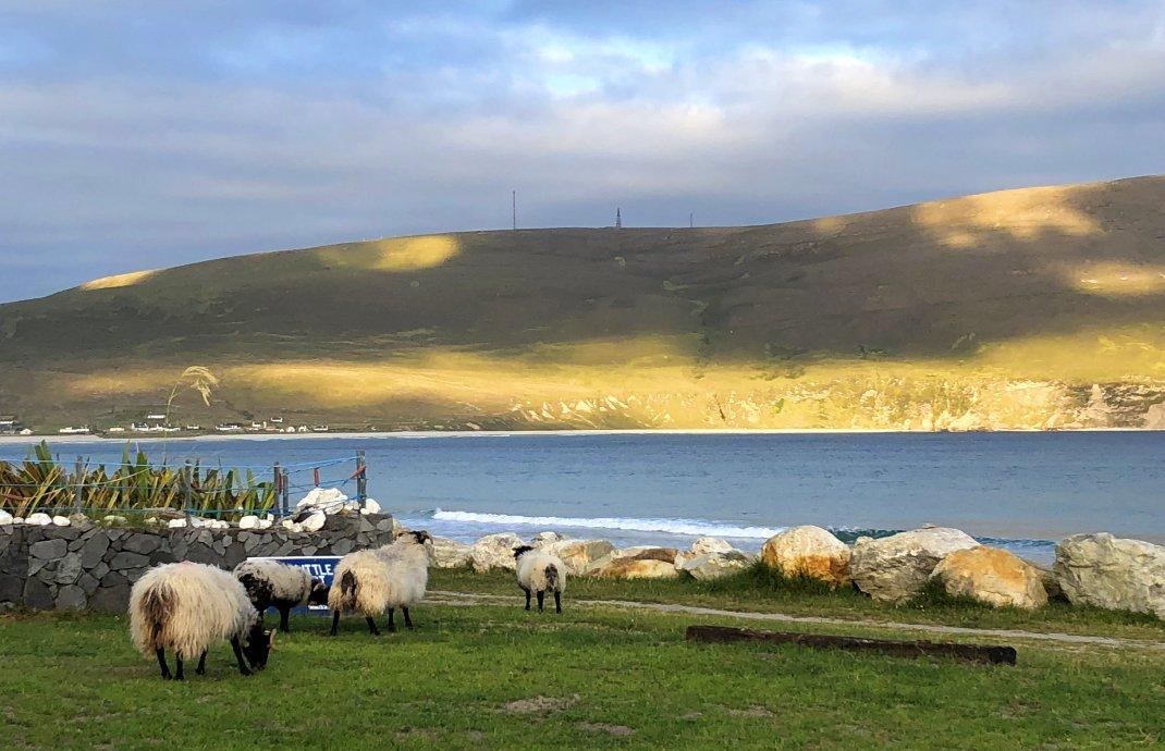 Schafe, Strand und Cliffs in der Bucht von Keem