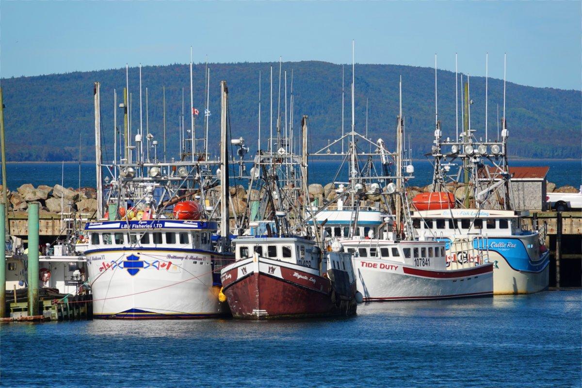 Fischerboote im Hafen von Digby