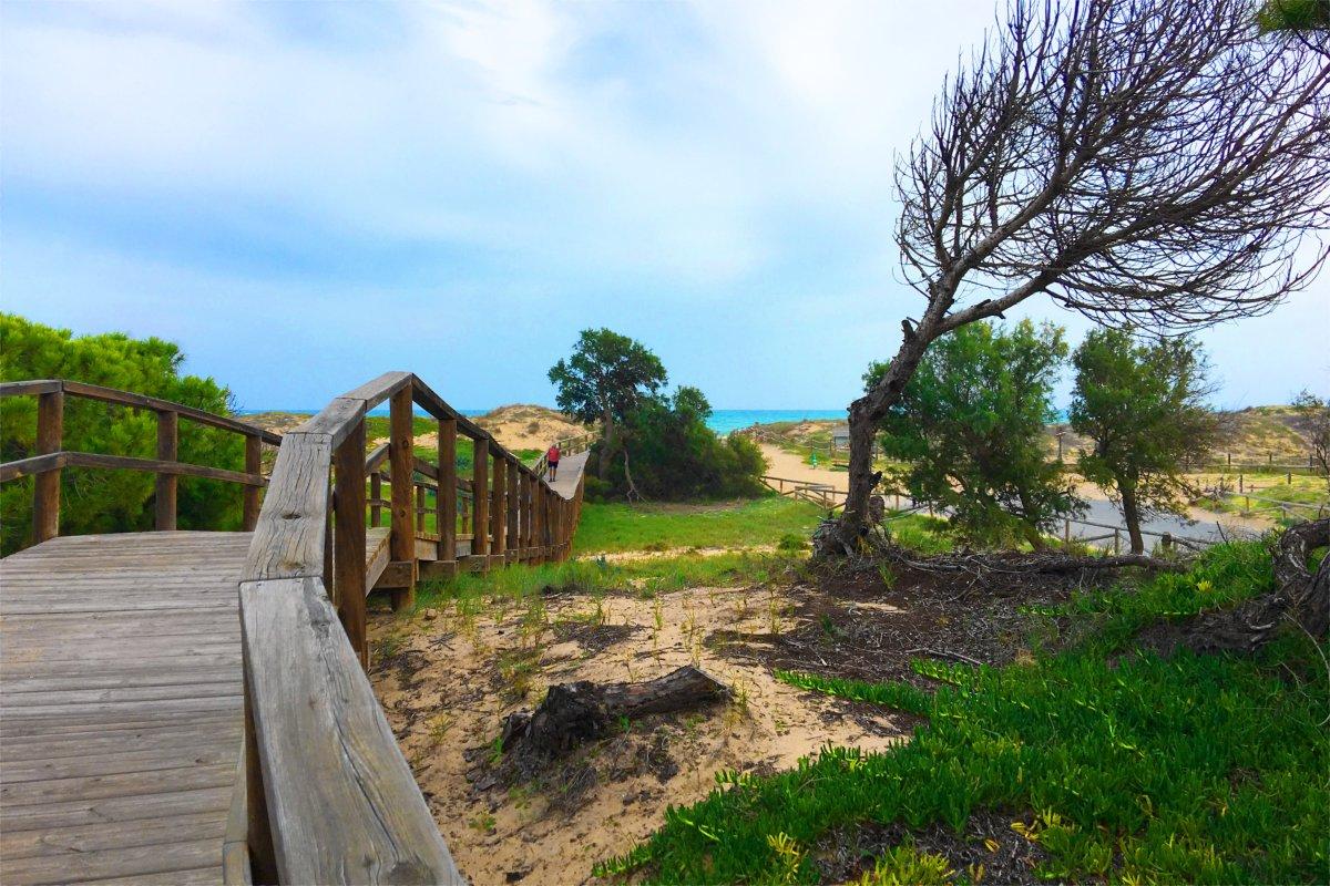 Holzbohlensteg zum Strand