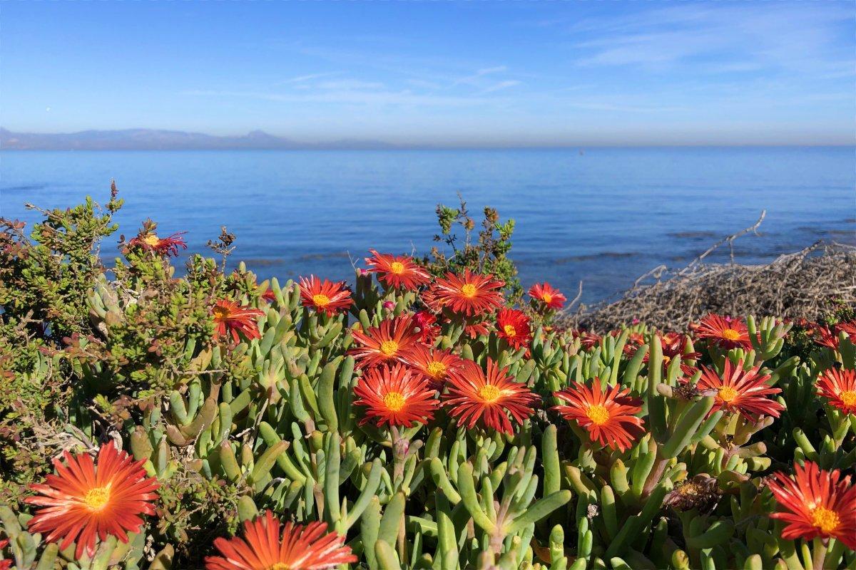Blumen und Meer