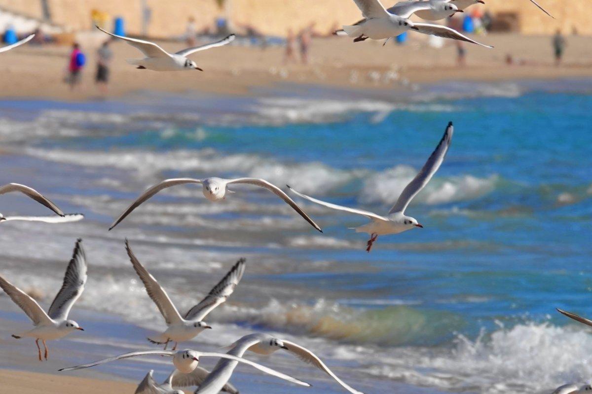 Aufgescheuchte Möwen am Strand