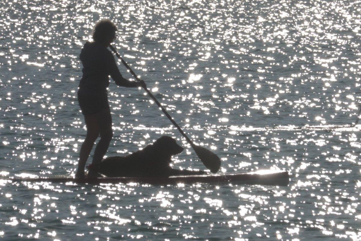 Standup Paddlerin mit Hund