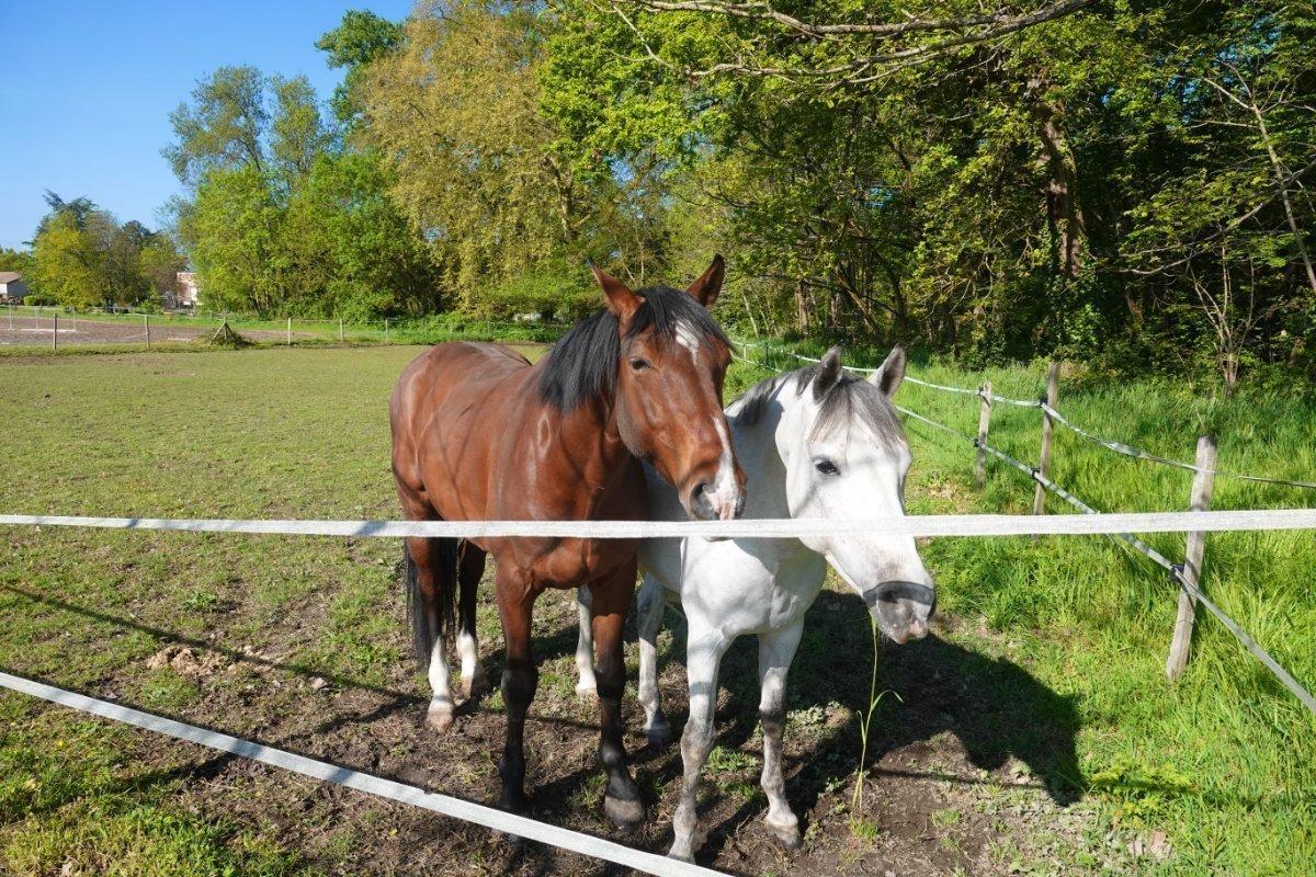 Pferde auf dem Chateau Saint Ahon