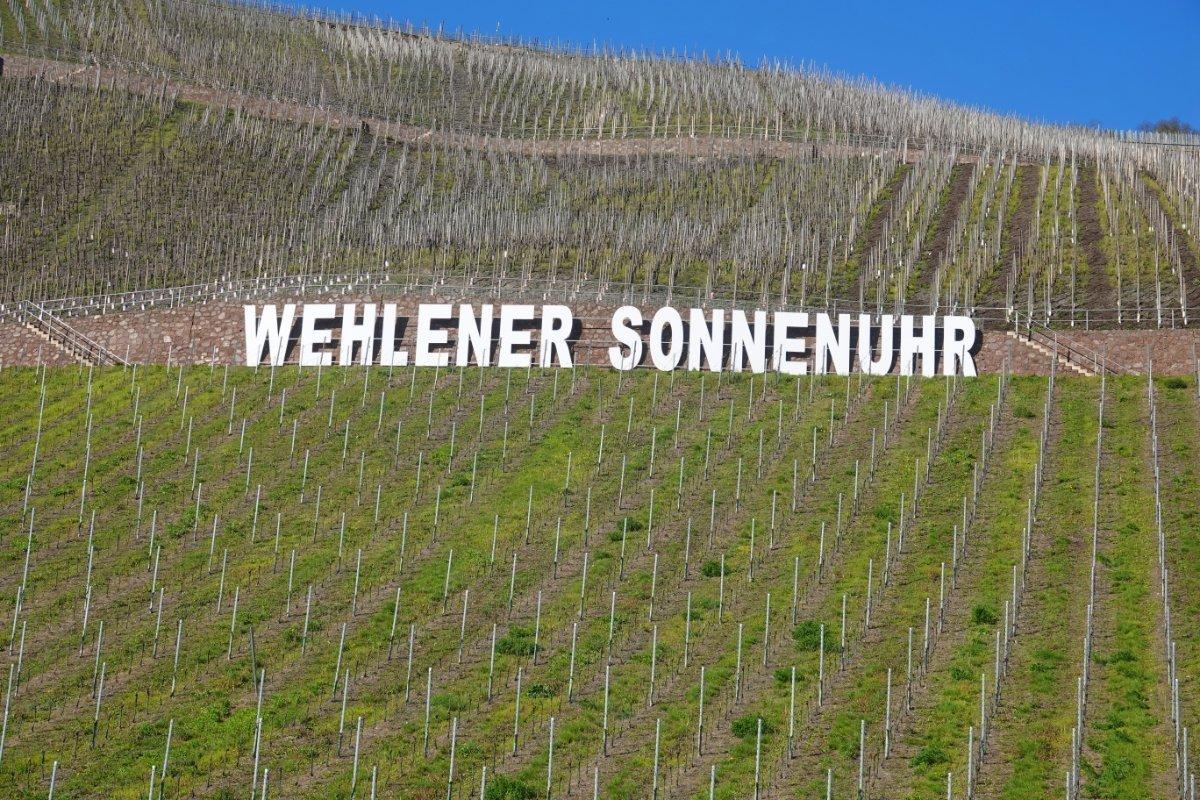 Wehlener Sonnenuhr Schriftzug im Weinberg