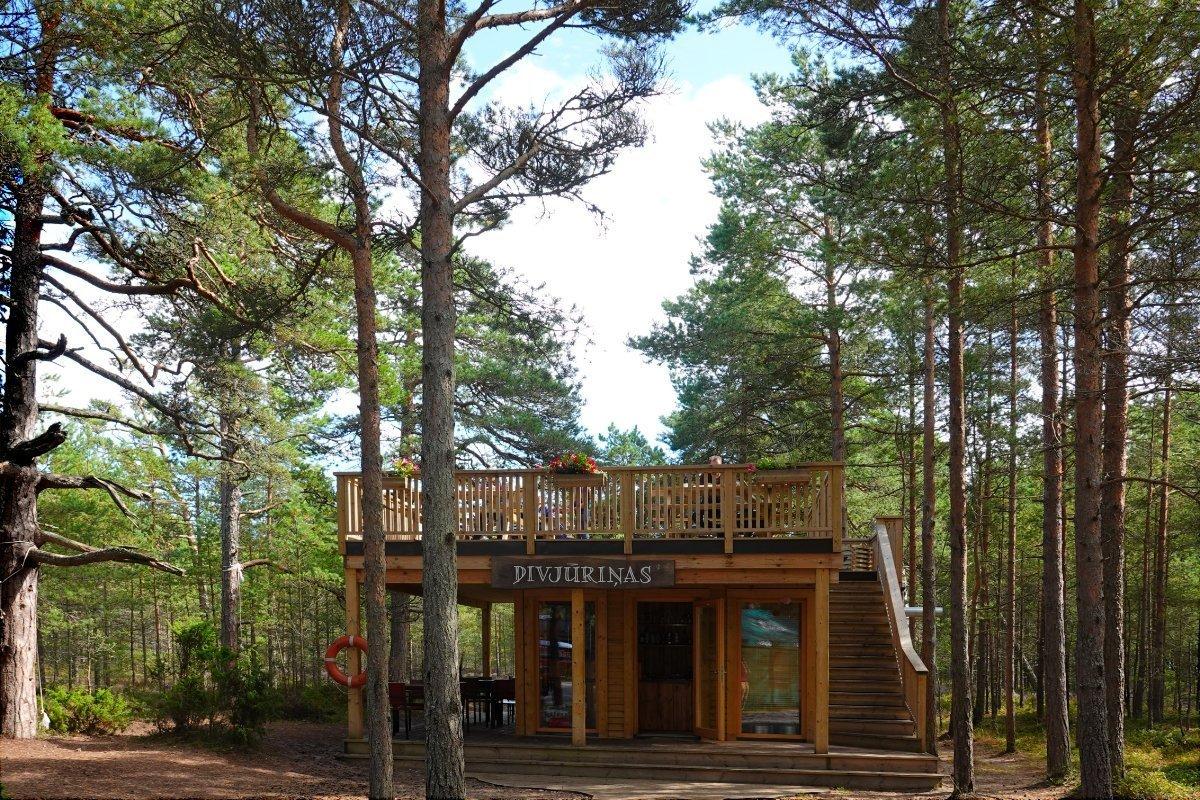 Dachgarten-Café im Wald am Kap Kolka