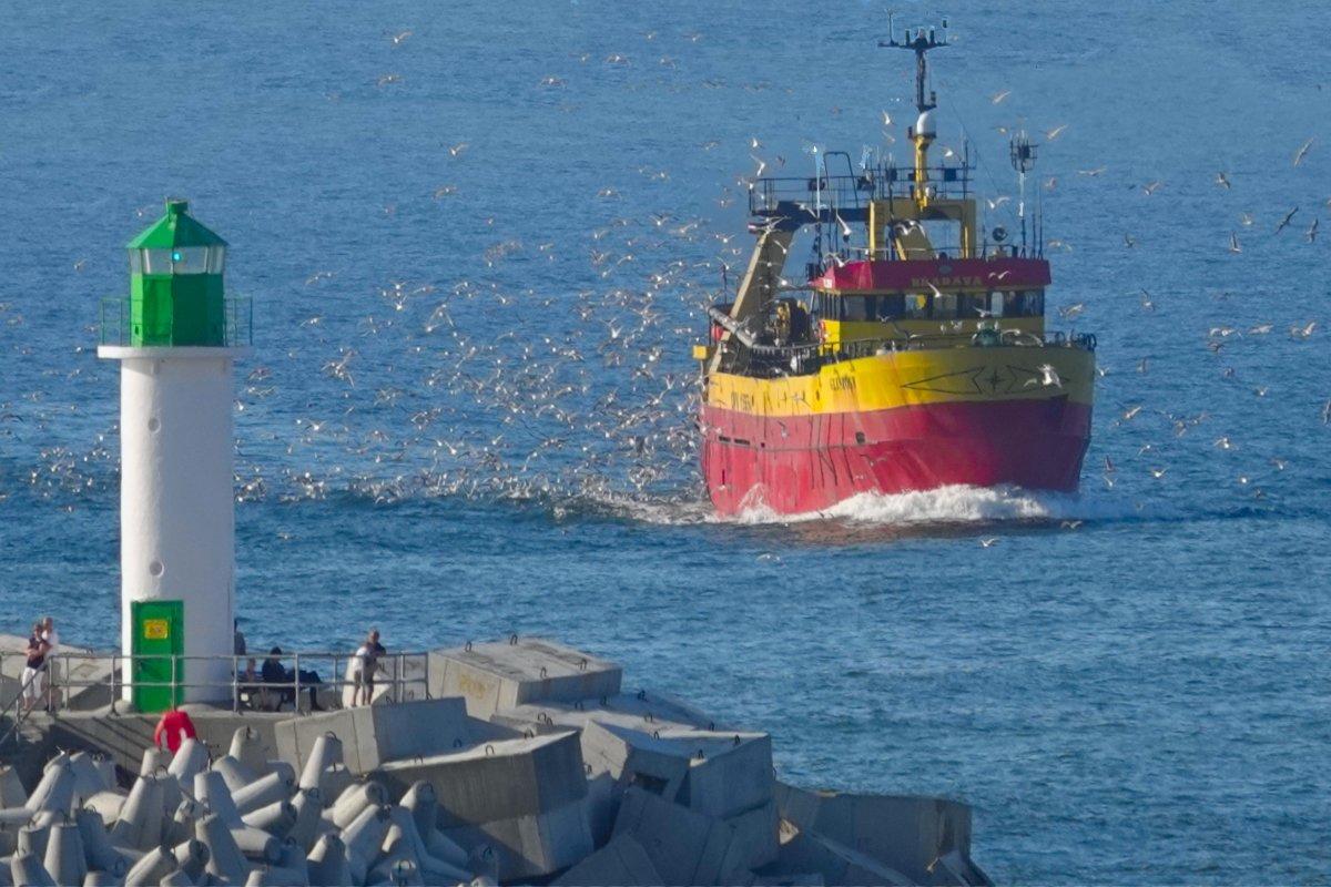 Fischkutter, begleitet von Hunderten von Möwen