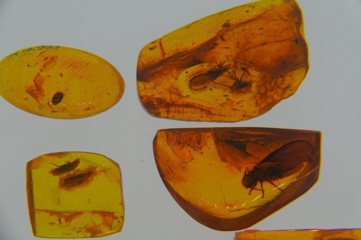 Insekteneinschlüsse