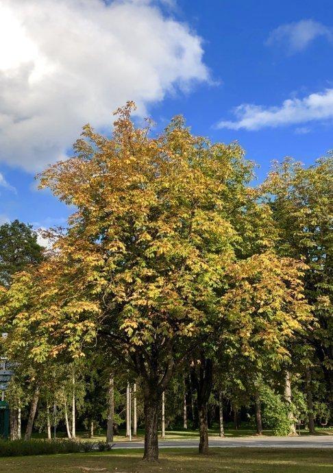 Erste Herbstfarben