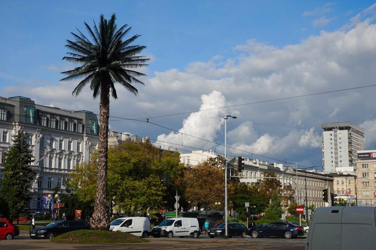 Palme mitten in Warschau - ist leider künstlich