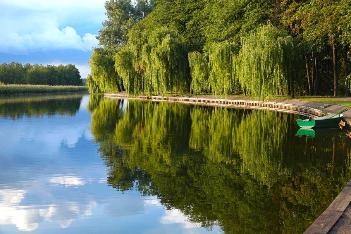 Spegelndes Laub im Augstow Kanal