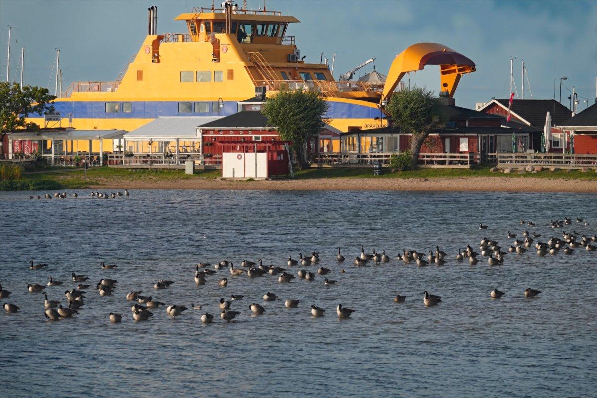 Lagune mit den vielen Gänsen vor dem Fähranleger