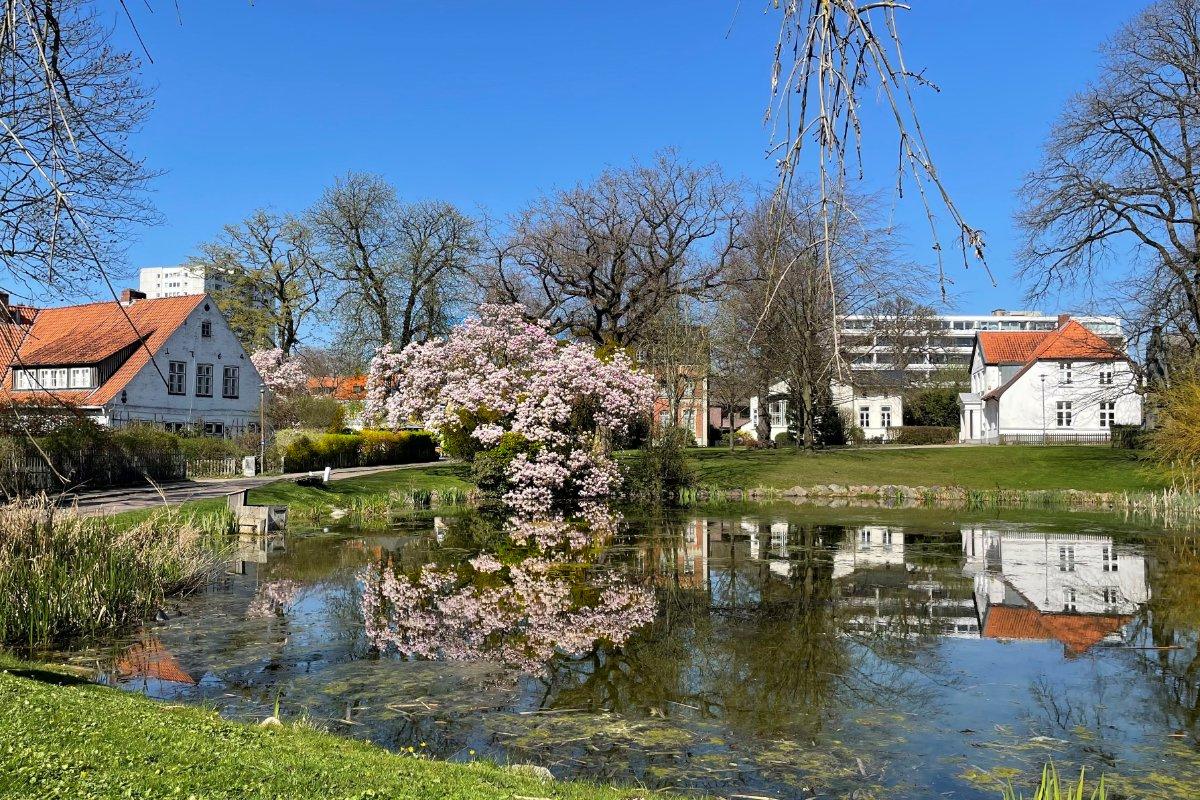 Klosterhofteich in Itzehoe