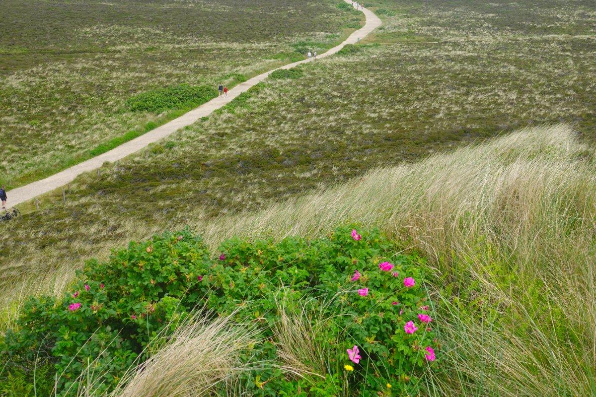 Blick von der Uwe-Düne auf die umliegende Dünenlandschaft