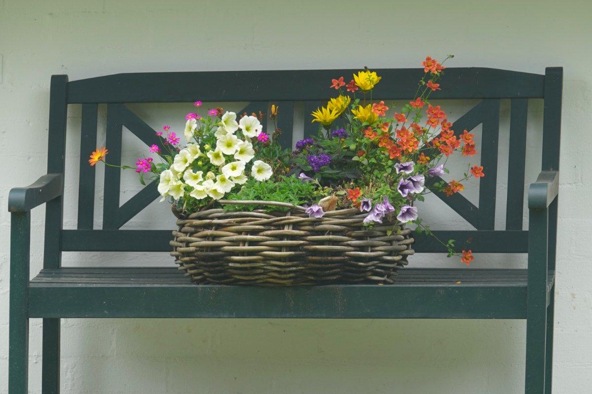 Blumen-Stillleben auf einer Bank in Keitum